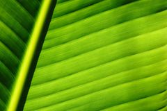 Het bladachtergrond van de palm stock afbeelding