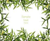 Het bladachtergrond van het bamboe stock afbeelding