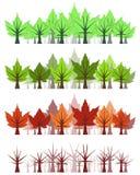 Het bladbos van de esdoorn - vier seizoenen Royalty-vrije Stock Afbeeldingen