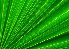 Het bladclose-up van de palm Royalty-vrije Stock Foto