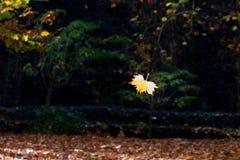 Het bladdaling van de herfst Achtergrond, digitaal art Royalty-vrije Stock Afbeelding