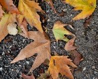 Het bladdaling van de herfst Achtergrond, digitaal art Gele droge bladeren op asfalt Kleuren van de herfst royalty-vrije stock foto's
