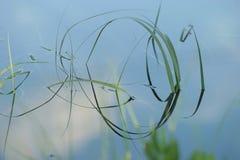 Het bladdetails van het gras in water stock afbeeldingen