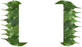 Het bladframe van ficussen Stock Foto's