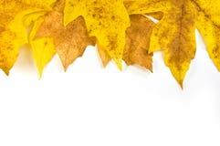 Het bladgrens van de herfst Stock Foto