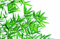 Het bladtakken van het bamboe Royalty-vrije Stock Foto