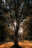 Het bladzon van het de herfstpark Royalty-vrije Stock Afbeeldingen