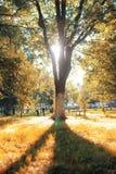 Het bladzon van het de herfstpark Royalty-vrije Stock Afbeelding