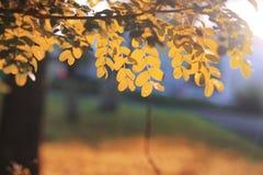 Het bladzon van het de herfstpark Stock Foto's