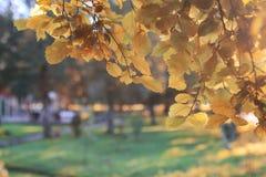 Het bladzon van het de herfstpark Royalty-vrije Stock Foto's
