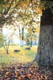 Het bladzon van het de herfstpark Stock Fotografie