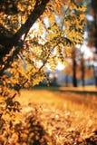 Het bladzon van het de herfstpark Stock Afbeeldingen