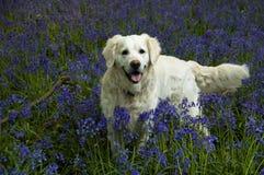 In het Blauw royalty-vrije stock fotografie