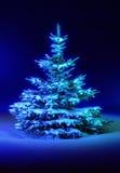 Het blauw van de kerstboom Stock Afbeelding