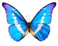 Het blauw van de vlinder dat over whteachtergrond wordt geïsoleerde Stock Afbeelding