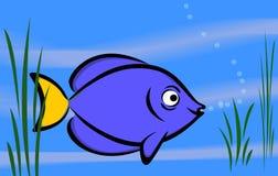 Het blauw van vissen Stock Afbeeldingen