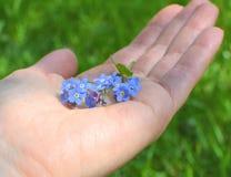 Het blauw vergeet me niet bloemen royalty-vrije stock afbeelding