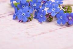Het blauw vergeet me niet bloemen op de hoogste juiste hoek van het beeld op een pastelkleur roze houten achtergrond Royalty-vrije Stock Afbeeldingen