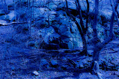 Het blauwe bos van de fantasieschemering Royalty-vrije Stock Afbeeldingen