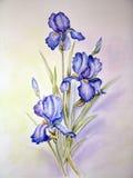 Het blauwe irissen schilderen Stock Afbeeldingen