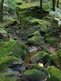 Het blauwe Nationale Park van Bergen, Unesco, Australië Royalty-vrije Stock Afbeelding