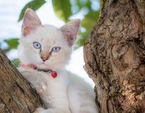 Het blauwe oog van de kindkat op boom Stock Fotografie