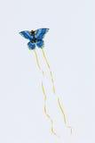 Het blauwe vlindervlieger vliegen Stock Foto's