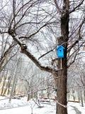 Het blauwe vogelhuis hangt hoogte in een boom voervogels in de winter stock afbeelding