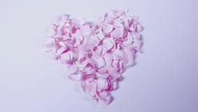 Het blazende hart vormde toenam bloemblaadjes uit van beeld in langzame motie, die binnen zoemen stock footage