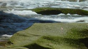 Het blazende park van de rotsenstaat Stock Afbeelding