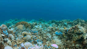 Het bleken van het koraal Royalty-vrije Stock Afbeelding