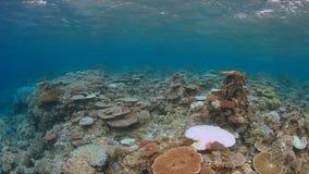 Het bleken van het koraal Royalty-vrije Stock Foto