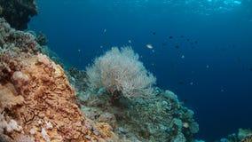 Het bleken van het koraal Stock Afbeeldingen