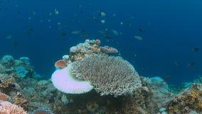 Het bleken van het koraal Royalty-vrije Stock Afbeeldingen