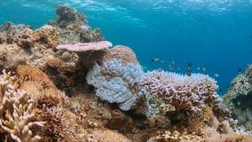 Het bleken van het koraal Royalty-vrije Stock Fotografie