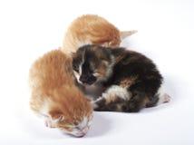 Het blinde katje van de baby dat in een stapel wordt verloren Stock Afbeelding