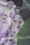 Het bloeien abstractie Royalty-vrije Stock Foto's