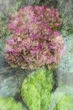 Het bloeien abstractie Royalty-vrije Stock Foto