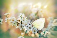 Het bloeien - bloeiende tak in nadruk (de lentetijd) stock afbeelding
