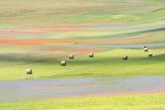 Het bloeien in Castelluccio Royalty-vrije Stock Afbeelding