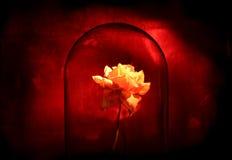 Het bloeien in dark royalty-vrije stock afbeeldingen