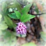 Het bloeien in de herfst Royalty-vrije Stock Fotografie