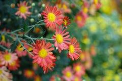 Het bloeien in de herfst royalty-vrije stock afbeelding