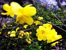 het bloeien in de vroege lente Stock Afbeeldingen