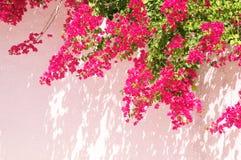 Het bloeien de zomer Royalty-vrije Stock Fotografie