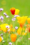 Het bloeien de Zomer Medow stock afbeelding