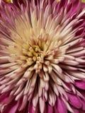 Het bloeien explosie stock fotografie