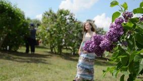Het bloeien lilac beweging van de boomtak in wind en vage toerist stock videobeelden