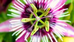 Het bloeien met Hartstocht Royalty-vrije Stock Foto
