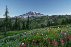 Het bloeien in Paradijs Stock Foto's